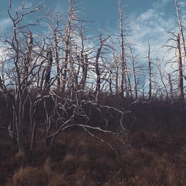 Gnarly lookin tree
