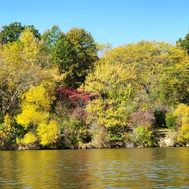 Fall colors on the bank
