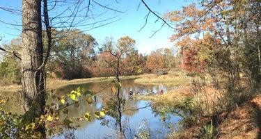 Foscue Creek