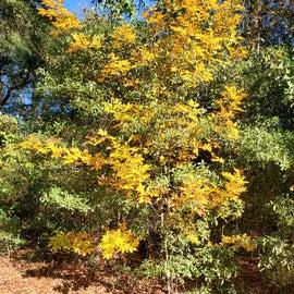Fall colors!!