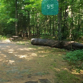 55 Campton Campground, WMNF