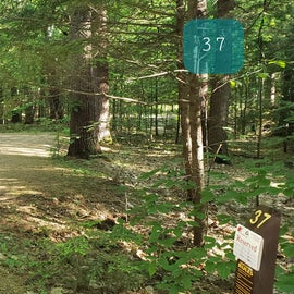 37 Campton Campground, WMNF