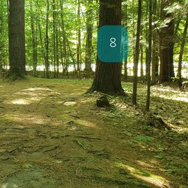 8 Campton Campground, WMNF