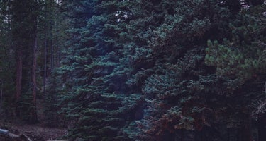 Roosevelt National Forest Jacks Gulch Campground