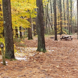 Site 8  Willard Brook State Forest. One of the sites designated for an RV