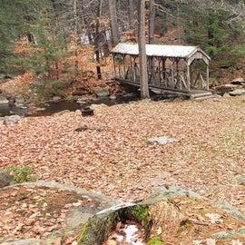 picnic area  Willard Brook State Forest