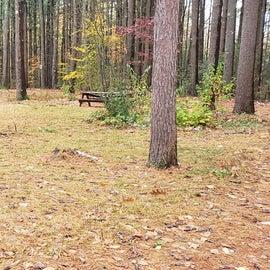 Site 20  Willard Brook State Forest