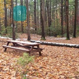 Site 3  Willard Brook State Forest