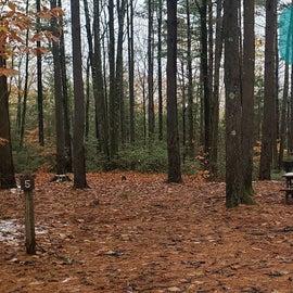 Site 5  Willard Brook State Forest