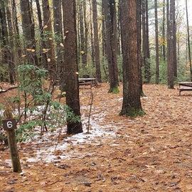 Site 6  Willard Brook State Forest