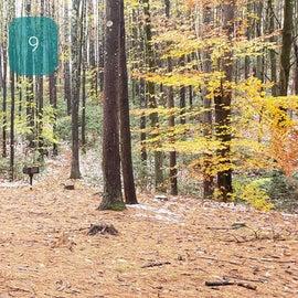 Site 9  Willard Brook State Forest