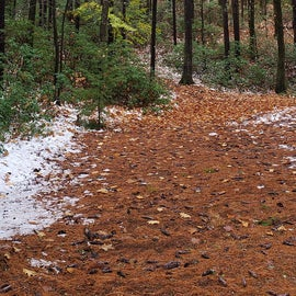 Trails to explore at  Willard Brook State Forest. You can hike to Pearl Lake State Park.