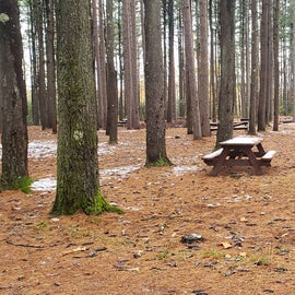 Campsites nestled among the pines  Willard Brook State Forest