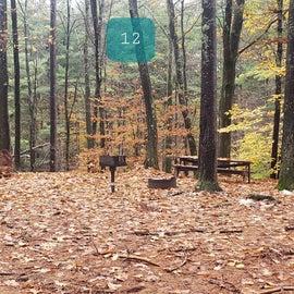 Site 12  Willard Brook State Forest