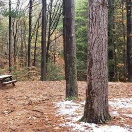 Site 14  Willard Brook State Forest