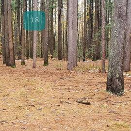 Site 18  Willard Brook State Forest