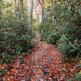 Balsam Fir Trail