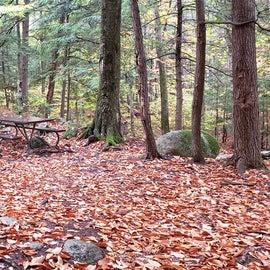 Site 1 Fourth Iron Campground