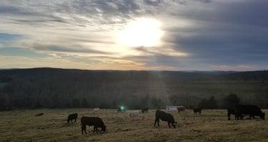 Wilderness Rider Buffalo Ranch and Adventure Park