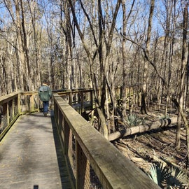 Congaree 2.6 mile boardwalk trail