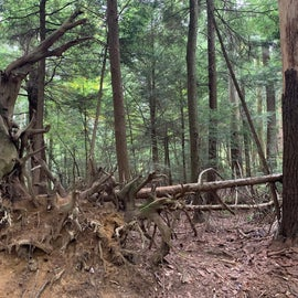Along the falls trail