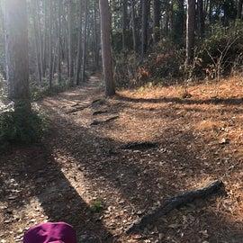 Rustling Leaves trail
