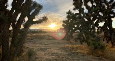 Joshua Tree Ranch Los Angeles