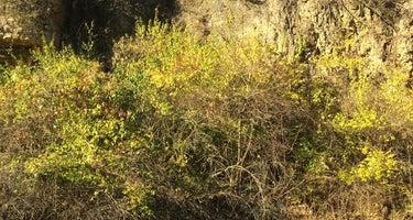 Seward Bluffs Forest Preserve