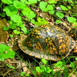 Found this guy along our hike on the Covered Bridge Trail.