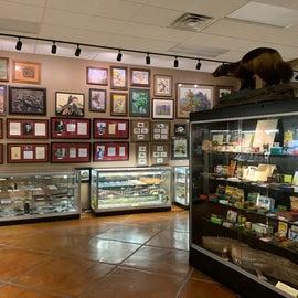 Inside the Chiricahua Desert Museum