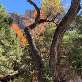 We visited the Coronado National Forest just west of Rusty's in Arizona.