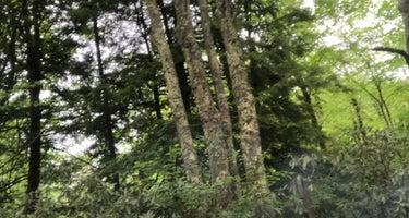 Tea Creek Campground