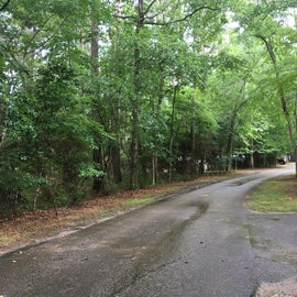 Road in the campground