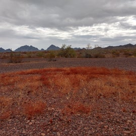 I was out for a hike and this patch of reddish grass looked very nice with the mountains behind it.