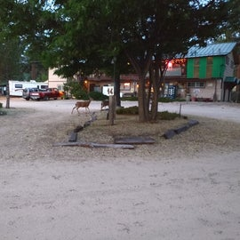 Deer near the Office. They had a small store inside too.