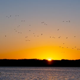 birds of the sanctuary at sunset