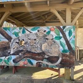 Fun Opossum artwork to stick your head in near Campsite 6