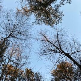 More gorgeous trees