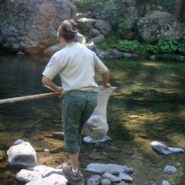 Fish and game restocking the stream.