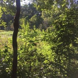 Woodsy walking trails