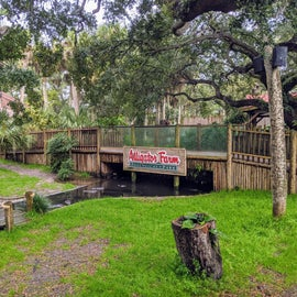 The Alligator Farm/Zoo/Bird Sanctuary is just across the road from the Park entrance. Neat place, worth the visit.