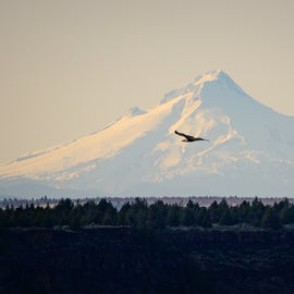 Bald Eagle flying in front of Mt. Hood from Lake Billy Chinook, Copyrighted by Christian Murillo Photography