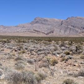 Vegetation view