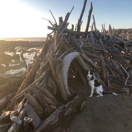 Lots of little driftwood structures scattered around