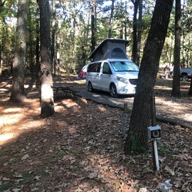Site 43 was wooded