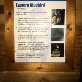 CAMPER CABIN BLUEBIRD