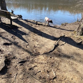 Off leash dog park near the pond.