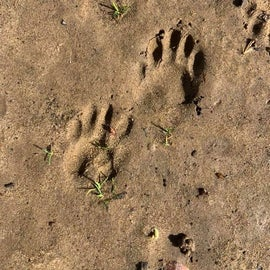 Critter Tracks
