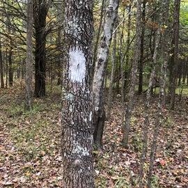 Blazes marked the Lake Dunn trail