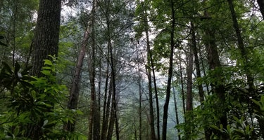 Jack's River Falls Trail/Cohutta Wilderness Backcountry Group Camp